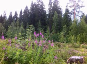 skogen 420