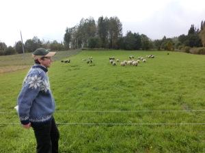 Inga-Lill Nordin och fåren